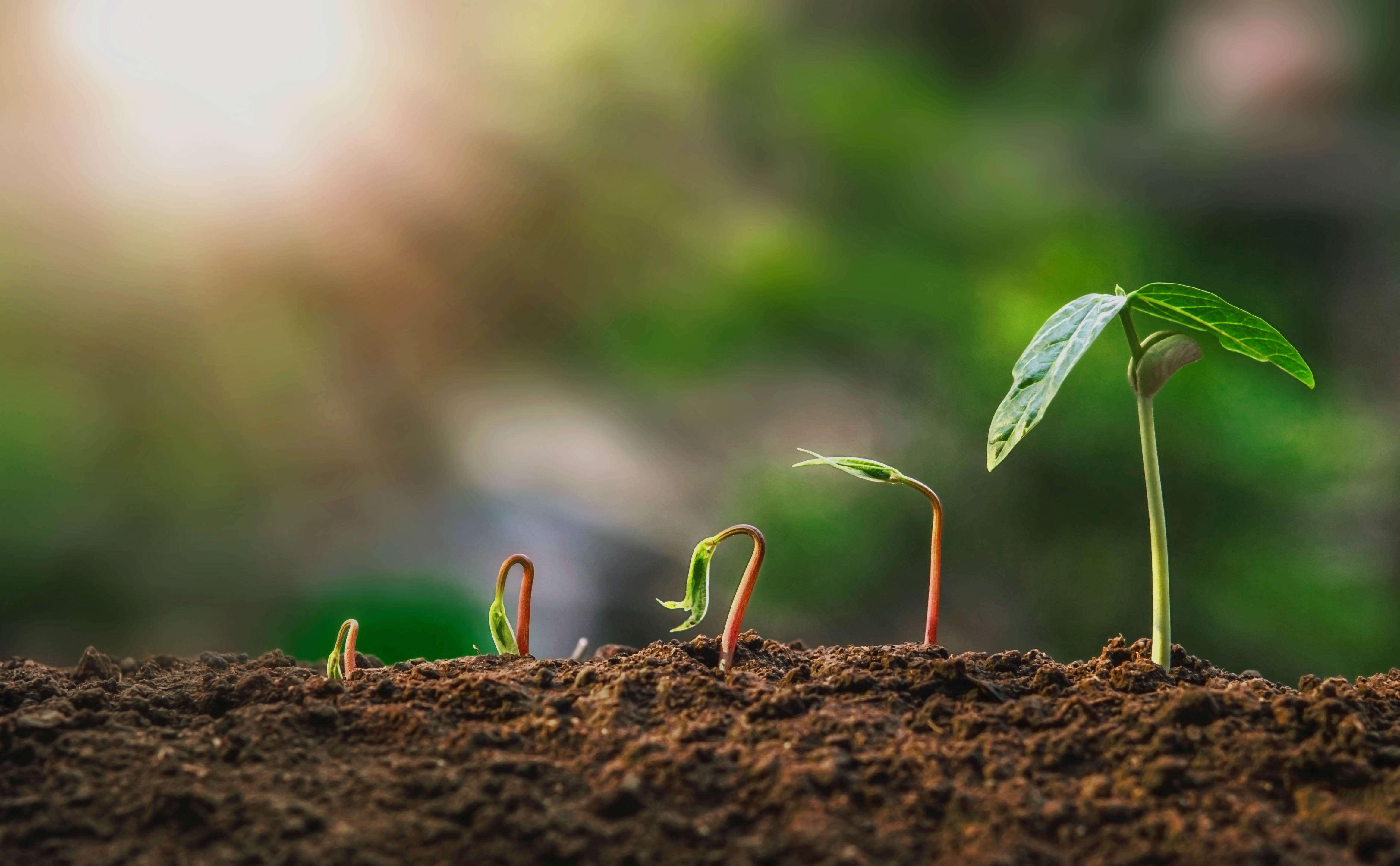 Bios Grow